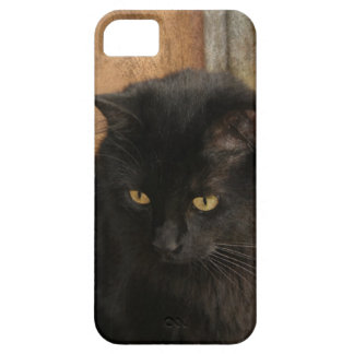 Black Cat, Amber Eyes, Earth Tones Textured Back iPhone 5 Cases