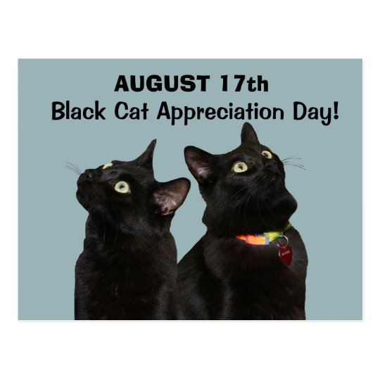 Black Cat Appreciation Day Postcard