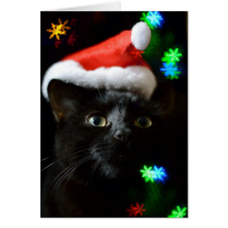 Black Cat at Christmas Time Card