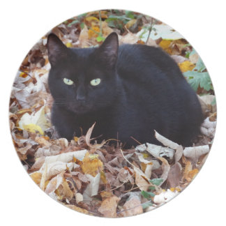 Black cat Autumn leaves Melamine Plate