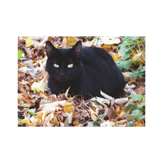 Black Cat Autumn Photo Single Canvas Print