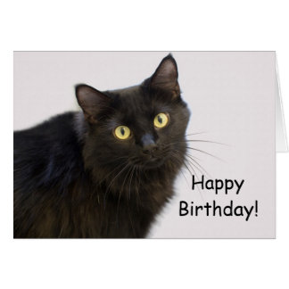 Black Cat Birthday Card by Focus for a Cause