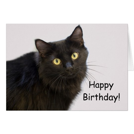 Black Cat Birthday Card by Focus for a