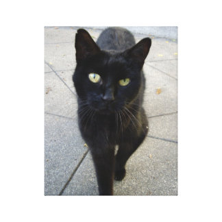 Black Cat Gallery Wrapped Canvas