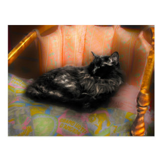 Black Cat Dreaming Postcard