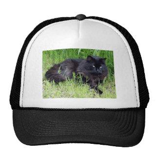 Black cat fluffy long hair feline regal proud cap