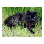 Black cat fluffy long hair feline regal proud post card