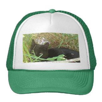 Black Cat Hiding in Grass Cap