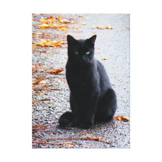 Black Cat in Fall Canvas