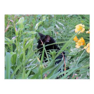 Black Cat In Flower Garden Postcard