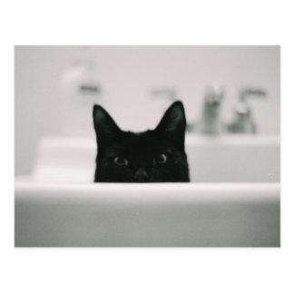 Black Cat in Sink Postcard