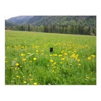 Black cat in the meadow - postcard