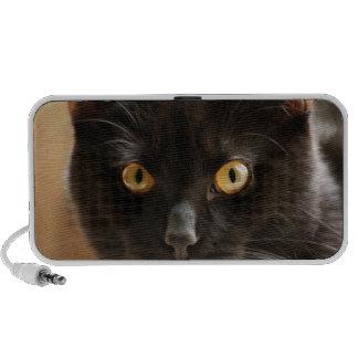 Black cat looking at camera eyes close up speaker