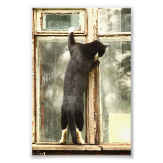 Black Cat Looking in Window Art Photo