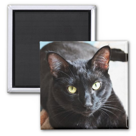 Black Cat Modern Photo Portrait Magnet