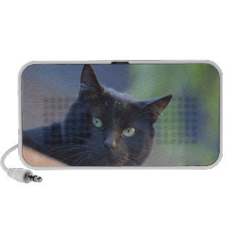 Black cat notebook speaker