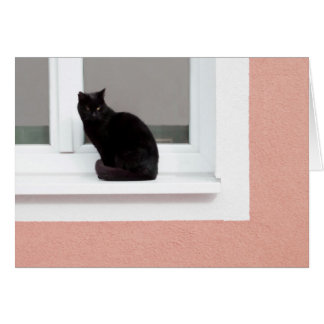 Black Cat on Coral Greeting Cards
