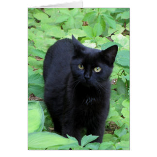 Black Cat on Lime Green plants Card