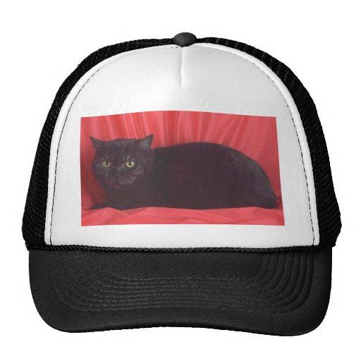 Black Cat - RED Hat