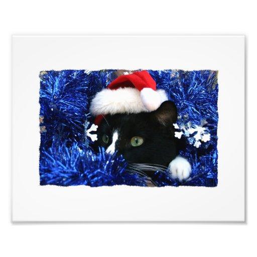 Black Cat, Santa hat, blue tinsel, ready to pounce Photo Art