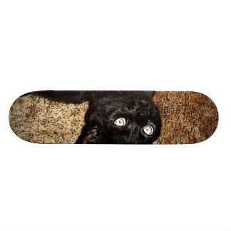 black cat 20.6 cm skateboard deck