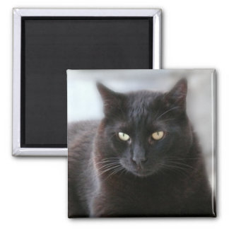 Black Cat Square Magnet