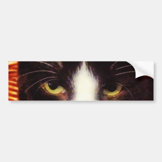 Black Cat Yellow Eyes Bumper Sticker Car Bumper Sticker