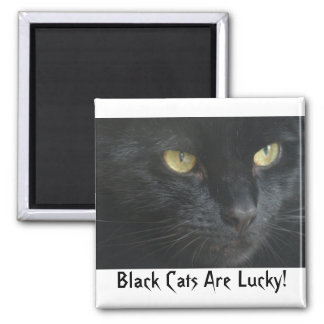 Black Cats Are Lucky! Magnet