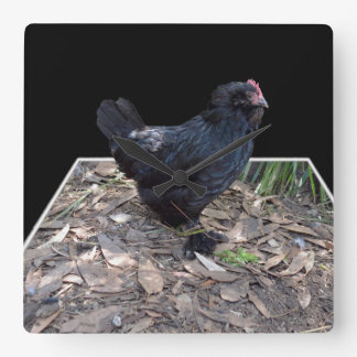 Black Chicken Pop Out,_Square Wall Clock