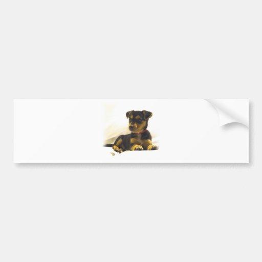 Black Chihuahua Bumper Sticker