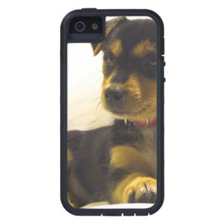 Black Chihuahua Case For iPhone 5