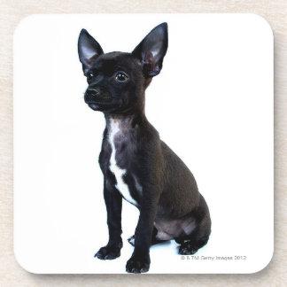 Black Chihuahua puppy Coaster