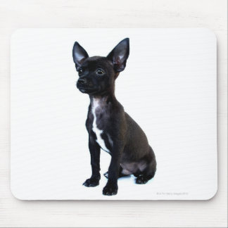 Black Chihuahua puppy Mouse Mat
