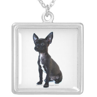 Black Chihuahua puppy Silver Plated Necklace