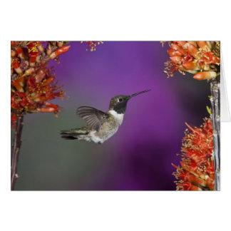 Black-chinned Humingbird Archilochus alexandri Greeting Cards