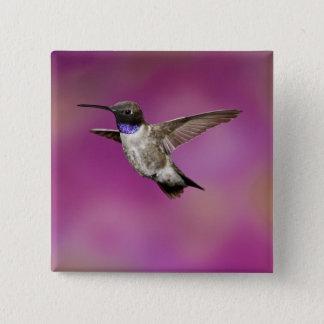 Black-chinned Hummingbird, Archilochus 15 Cm Square Badge