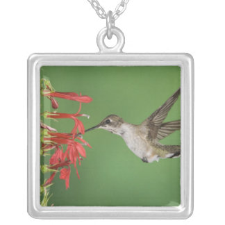 Black-chinned Hummingbird, Archilochus 2 Silver Plated Necklace