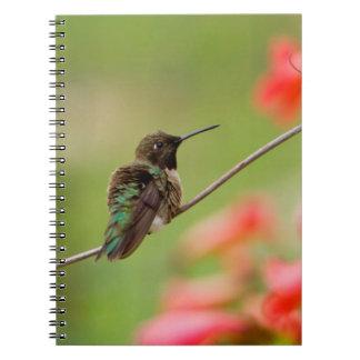 Black-Chinned Hummingbird Notebook
