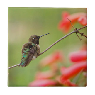 Black-Chinned Hummingbird Tile