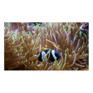 Black Clown Fish Pack Of Standard Business Cards