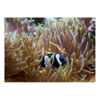 Black Clown Fish Pack Of Chubby Business Cards