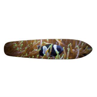 Black Clown Fish Custom Skate Board