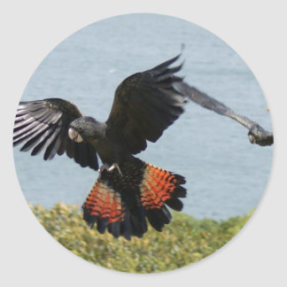 Black Cockatoo in for landing Classic Round Sticker