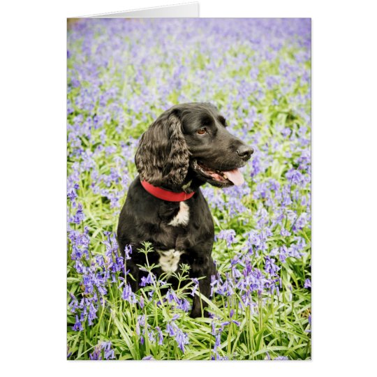 Black cocker in Bluebells Card