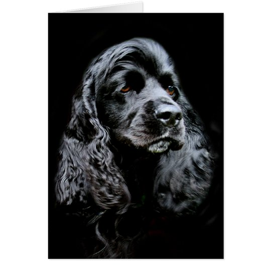 Black Cocker Spaniel Card