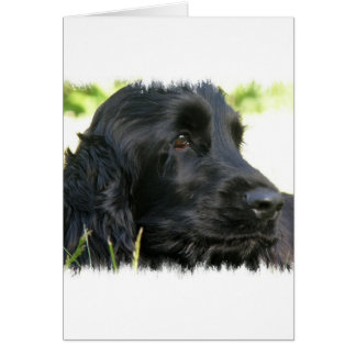 Black Cocker Spaniel Dog Greeting Card