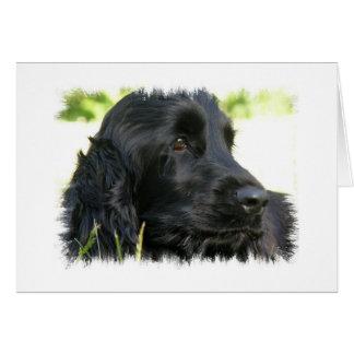 Black Cocker Spaniel Dog Greeting Card
