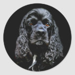 Black Cocker Spaniel Round Stickers