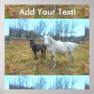 Black Colt White Horse Poster
