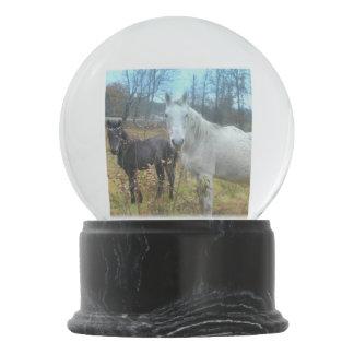 Black Colt White Horse Snow Globes